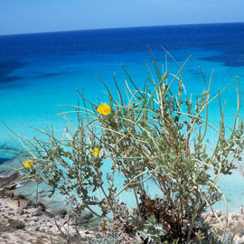 lampedusa-nature-intro