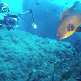 ustica-diving-fossa-della-colombara